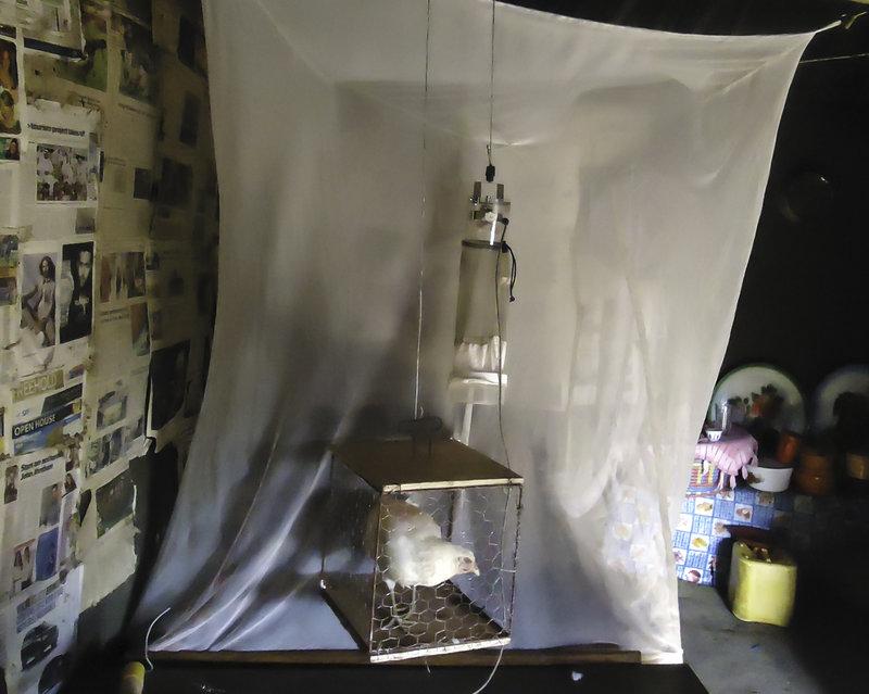 Sebuah ruangan yang terdapat ayam hidup dalam kandang kecil mempunyai resiko lebih kecil diserang nyamuk pembawa malaria