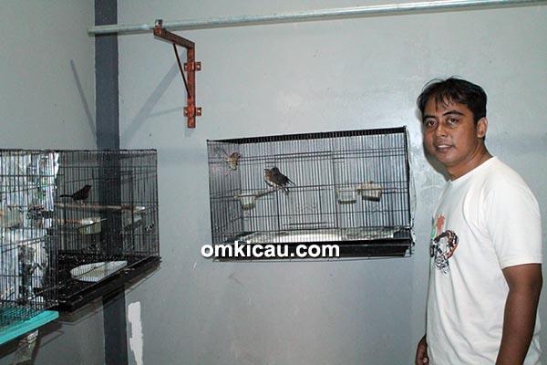 Breeding murai batu JBF Bekasi-Om Bayu