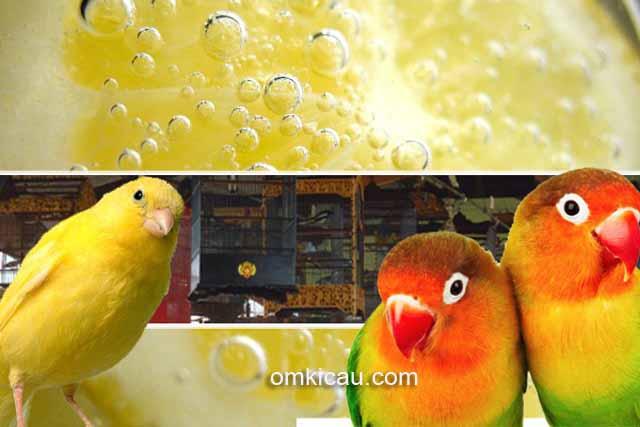 Membuat larutan khusus untuk atasi burung yang diare dan dehidrasi