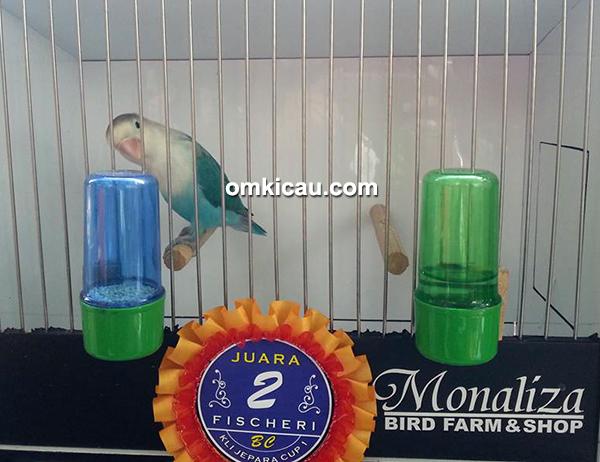 Lovebird Emon