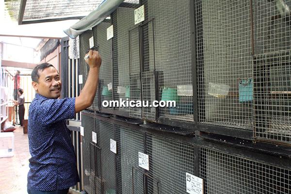 Breeding murai batu NSM BF Bogor