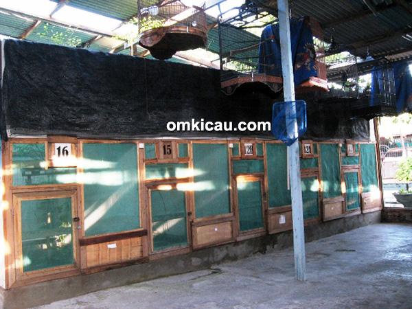 Penangkaran murai batu Eska Farm Surabaya