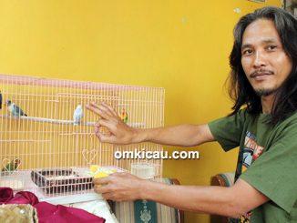 Breeding lovebird Iyunk Jagakarsa