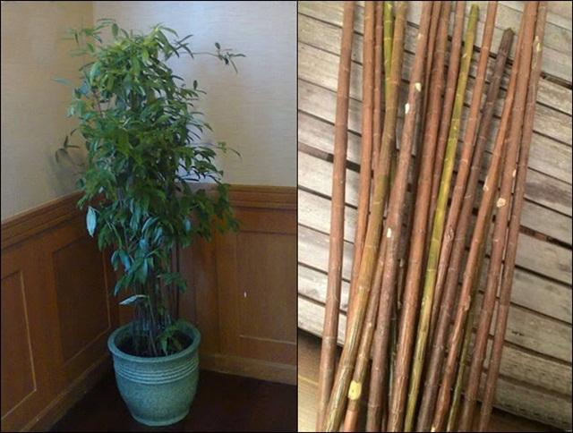 bambu-jepang-untuk-tenggeran