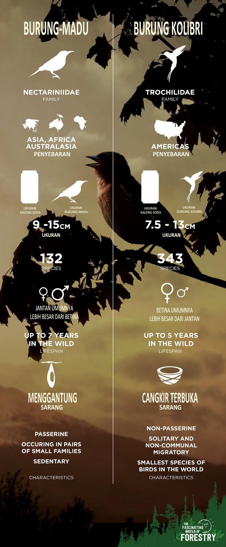 Terjemahan Infografis burung-madu dan kolibri dari thefascinatingworldofforestry.com