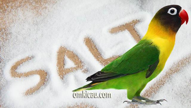 Beragam manfaat garam untuk burung peliharaan