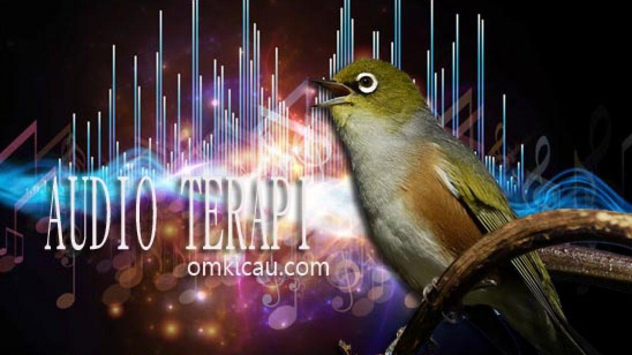 Empat Suara Terapi Untuk Pemulihan Burung Stres Dan Macet Bunyi Serta Pembangkit Energi Dan Daya Tahan Burung Om Kicau