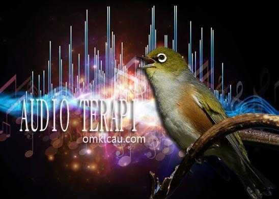 Kumpulan suara terapi untuk burung