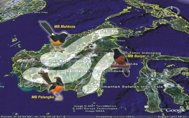 Sebaran Habitat Muray Batu Borneo