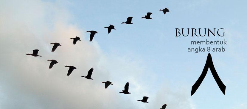 1image-kekuatan-terbang-burung