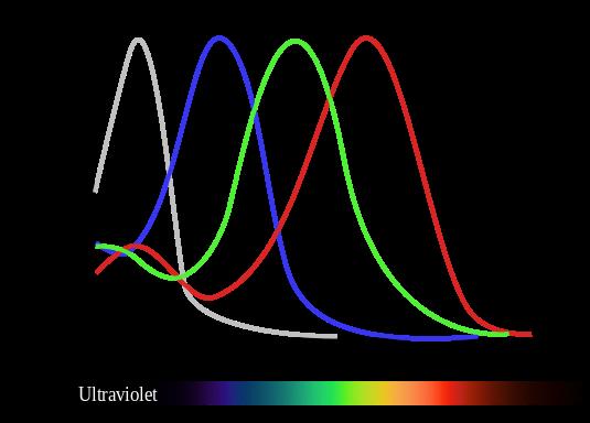 keempat-pigmen-dalam-sel-fotoreseptor-kerucut-burung-memperluas-jangkauan-penglihatan-warna-sampai-ke-ultraviolet-1617