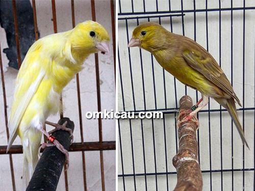 feat-nano-canary