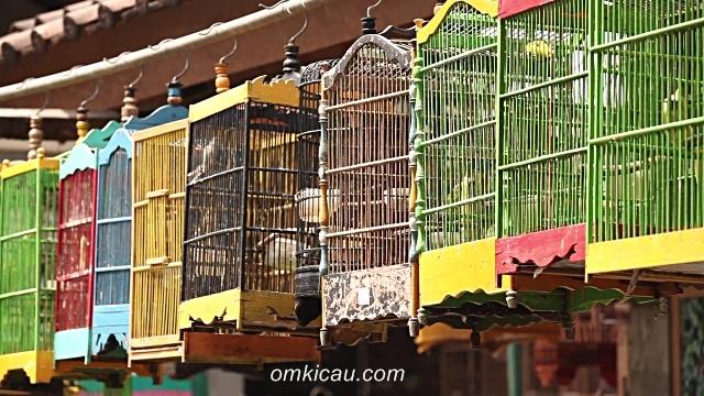harga burung 2015