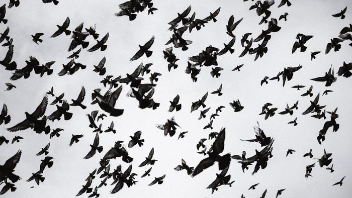 kelompok-burung-terbang