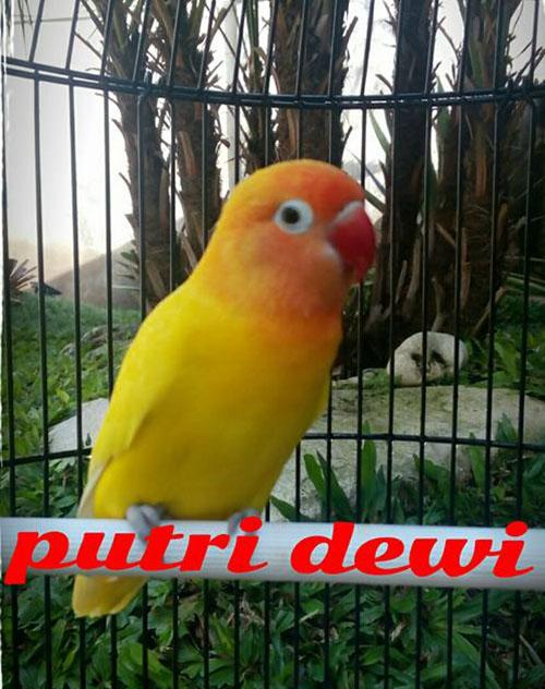 LB Putri Dewi