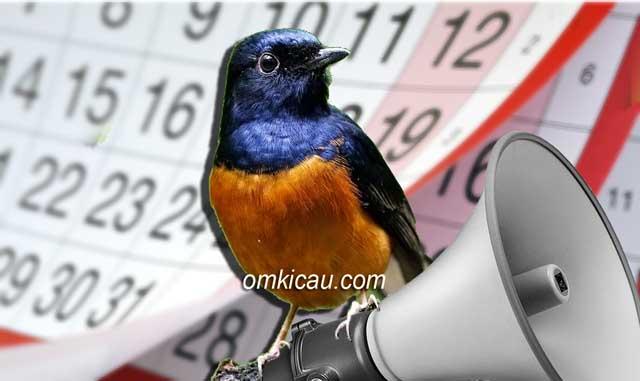 Memaksimalkan volume suara burung murai batu