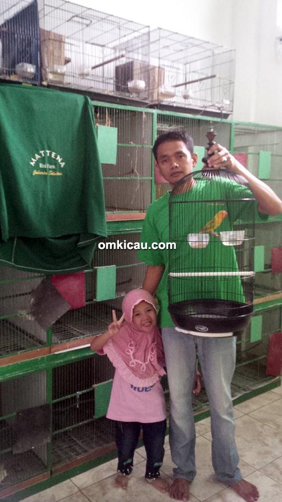 breeding lovebird Mattena BF Jakarta