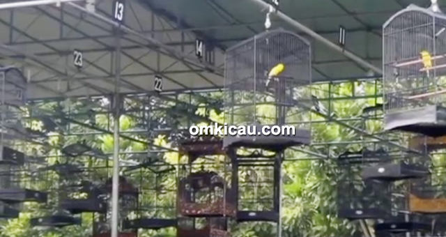 Festival Jawara Kicau-kelas kenari