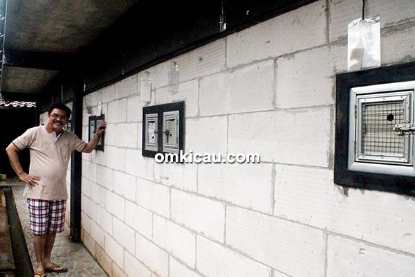 Breeding murai batu Puspitaloka BF Tangerang