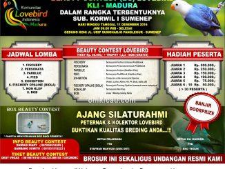 Brosur Lovebird Beauty Contest KLI Madura, Sumenep, 11 Desember 2016