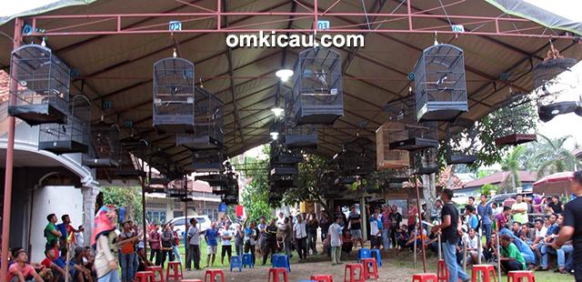 Suasana penjurian kelas kacer dalam Latpres Sakti Bird di Kota Jambi, Kamis (24/11).