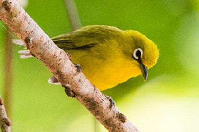 Unduh 550+ Foto Gambar Burung Pleci Terbang HD Terbaik Free