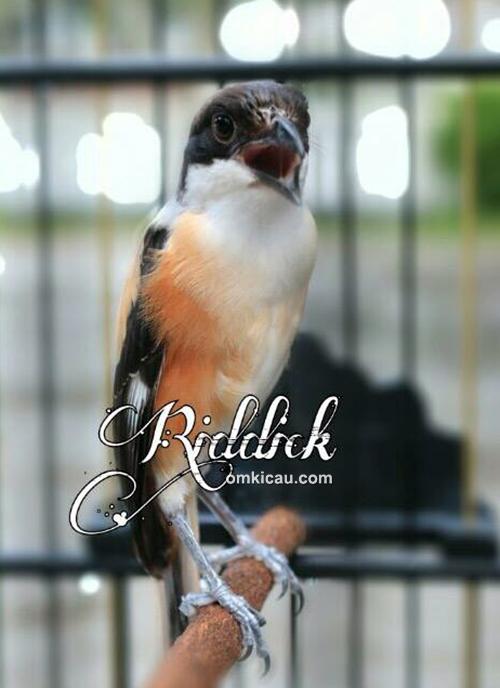 Cendet Riddick
