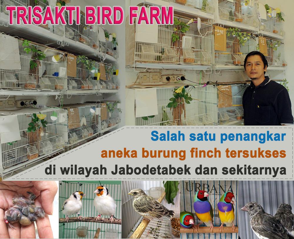 Iklan Trisakti Bird Farm Jakarta