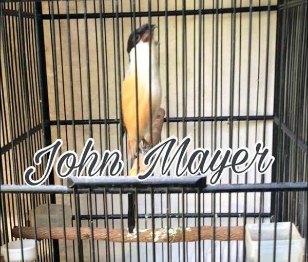 Pentet John Mayer