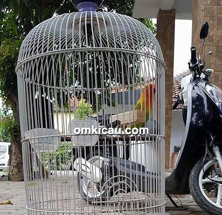 Lovebird Ucrit
