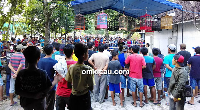 Suasana Latber Saturday Kalisari