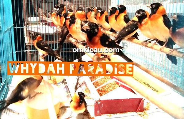 Whydah Paradise