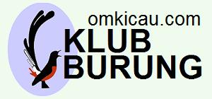 KLUB BURUNG - OMKICAU.COM