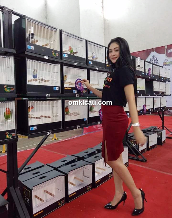 lovebird beauty contest KLI Madura-1