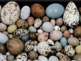 Telur burung yang berbeda-beda warna