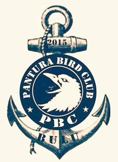 Logo Pantura BC Bulu Tuban