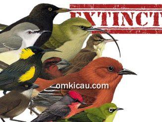 10 burung punah di dunia