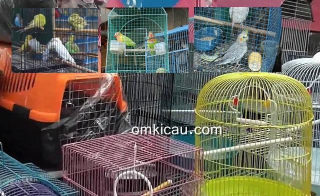 Daftar harga pasaran burung kicauan di seputaran JABODETABEK, Januari 2017