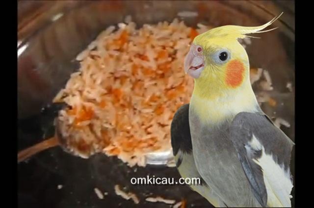 Pakan racikan kaya gizi berbahan beras merah untuk burung cockatiel