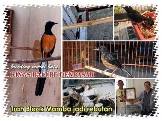 Kings Bali BF Denpasar