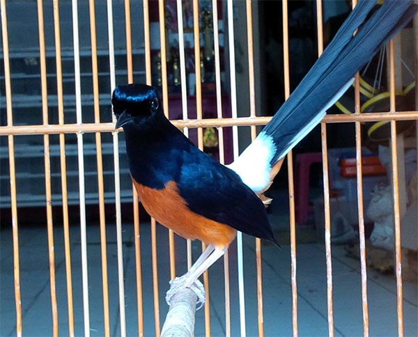Leuser Bird Shop Pekanbaru