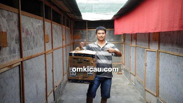 Breeding murai batu Lina BF Bandarlampung