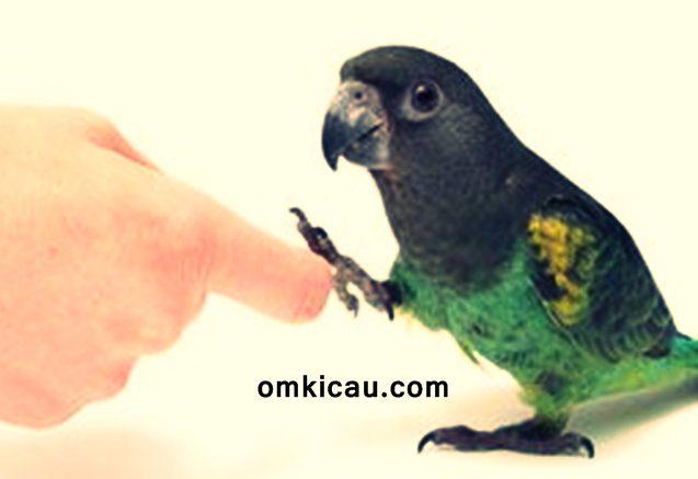 Memahami bahasa tubuh burung sebagai salah satu bentuk interaksi