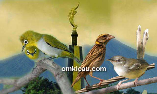 Jumlah burung liar di perkotaan yang terus menurun