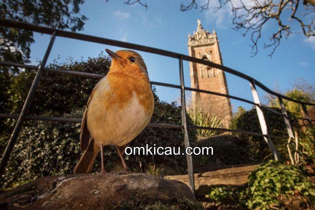 Mengamati burung baik untuk kesehatan mental
