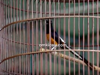 Lomba burung berkicau Soeharto Cup IV