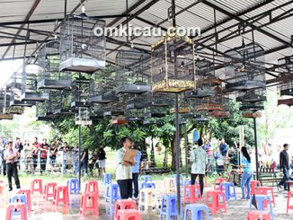 Lomba burung berkicau 2nd Anniversary ILF Jambi
