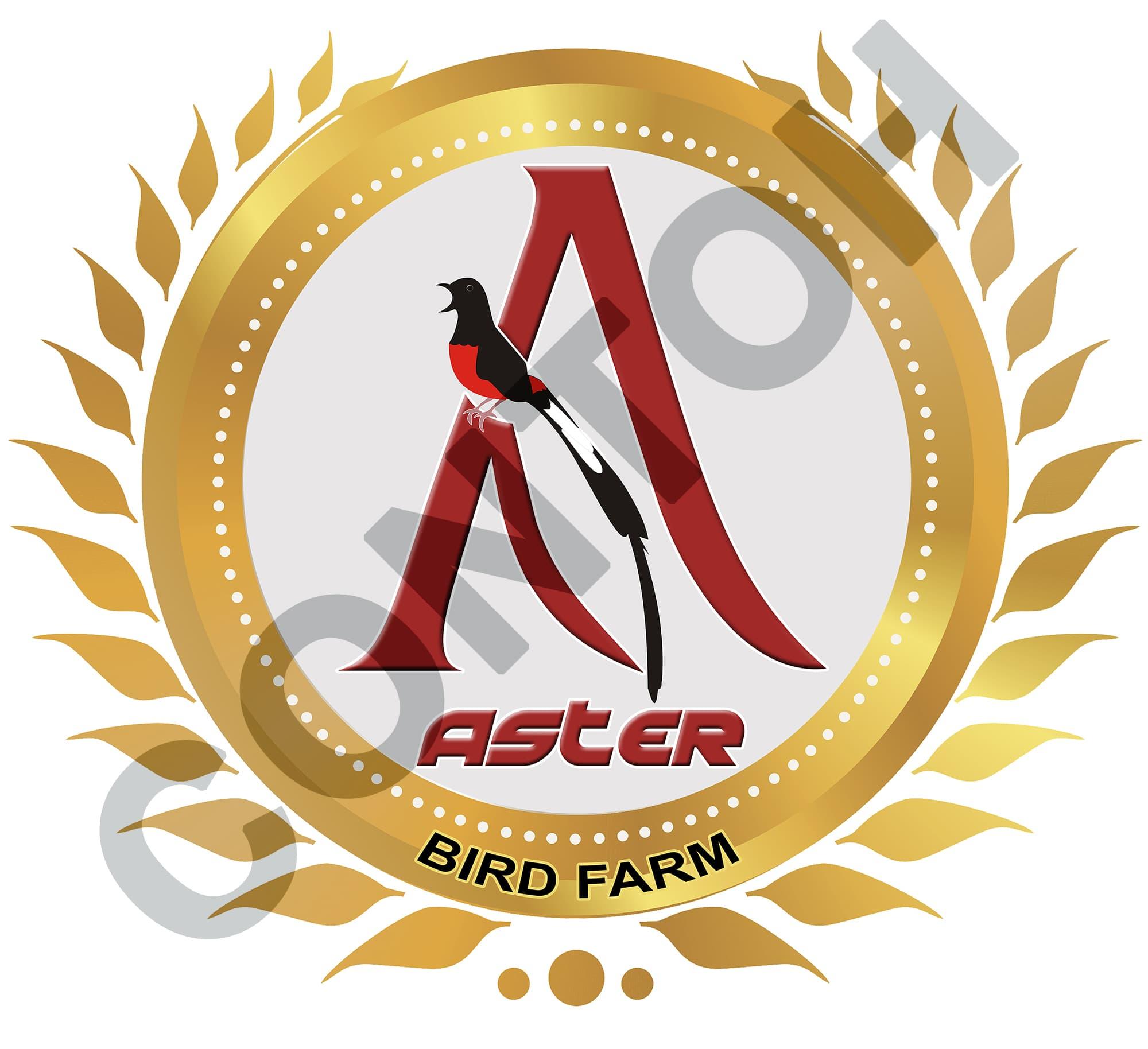 54+ Foto Desain Logo Murai Batu HD Terbaru Yang Bisa Anda Tiru