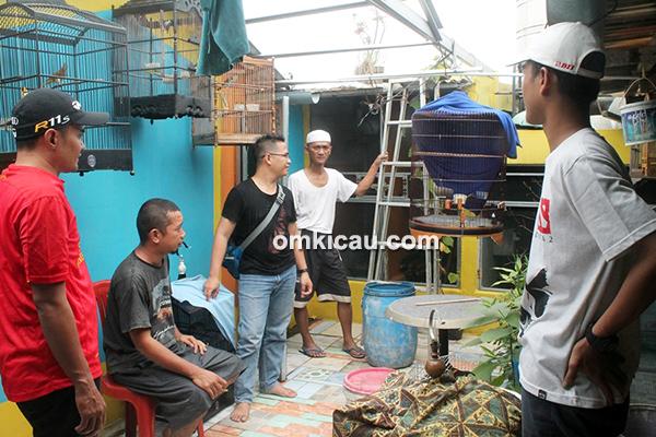 Breeding murai batu SMP BF Jakarta