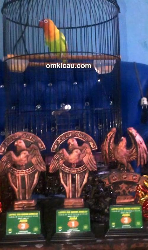 Lovebird Amoi milik Om Iwan SBC